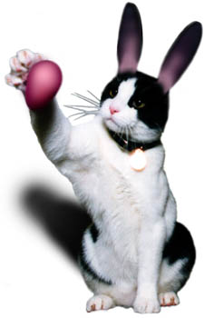 EasterKitty236w.jpg