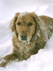 Taffy-Snow-Mtn-1.jpg