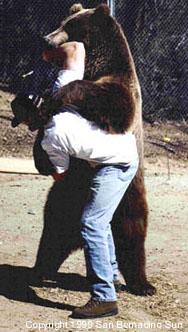 bearwrestlecopy.jpg