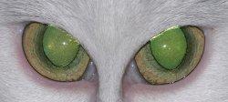 greeneyes.jpg
