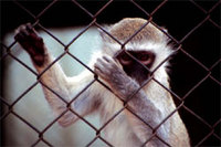 monkeys!.jpg
