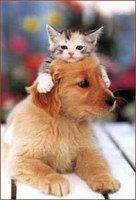 puppy_kitten.jpg