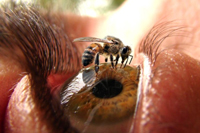 wasp_eye.jpg